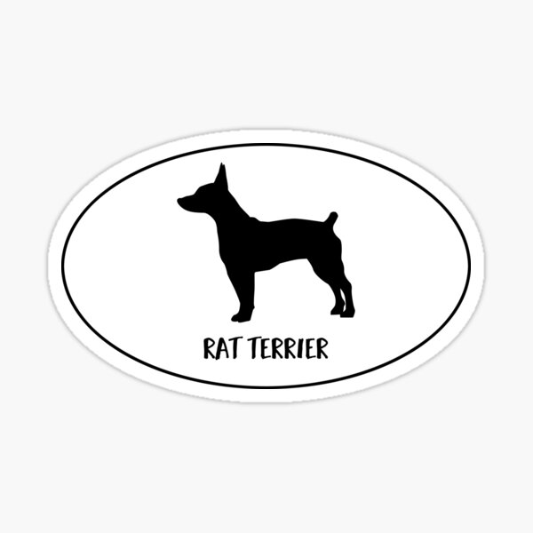 Rat Terrier Docked Tail Dog Classic Breed Silhouette Oval Sticker Sticker