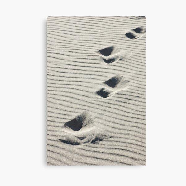 Across the Dunes Canvas Print
