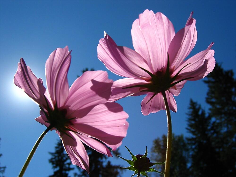 Sunbathing - Banff by marklow