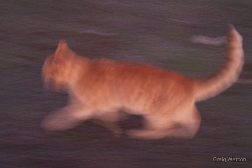Blurred cat on the run... by Craig Watson