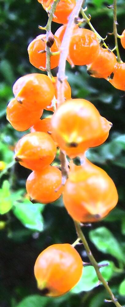 Orange by LukeGD