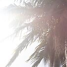 sunkissed palms by classical