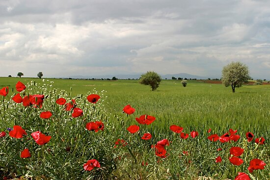 Landscape with Poppies by Jens Helmstedt