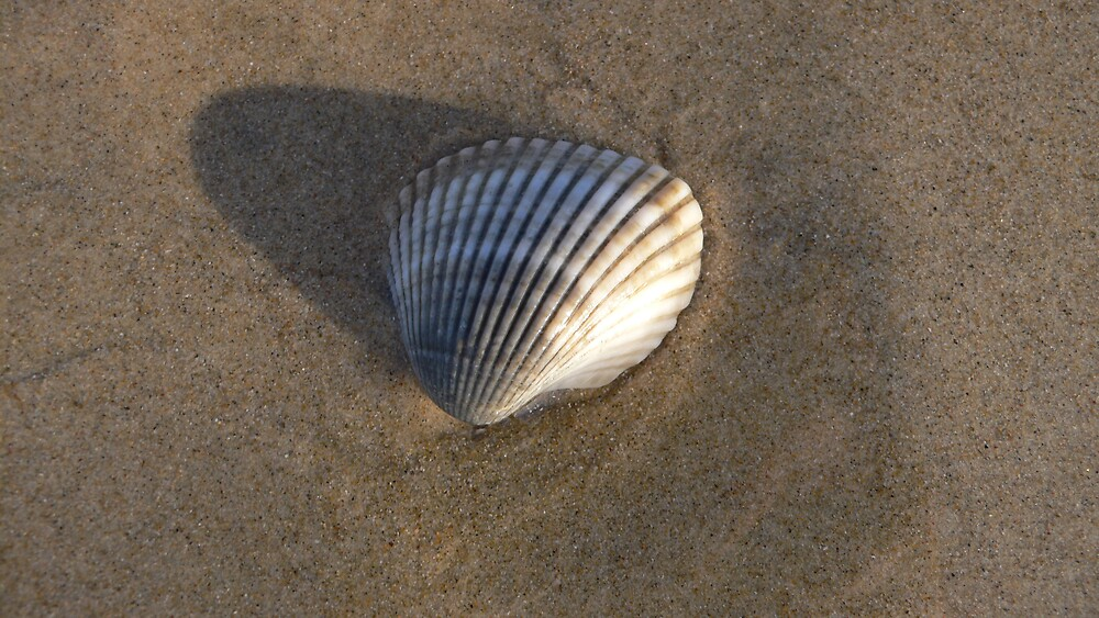 Seashell by mozzi