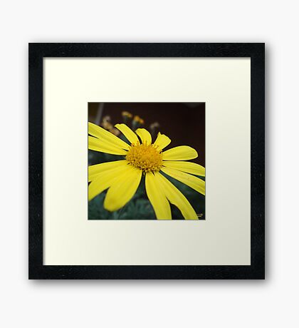 Petals of Gold Framed Print