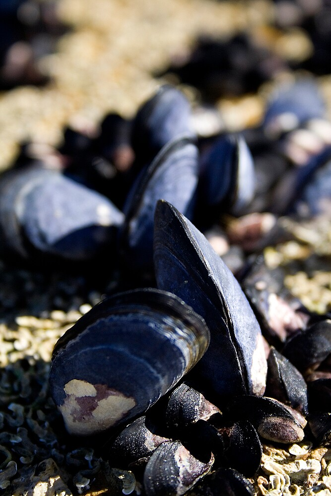 mussels by Heath Carney