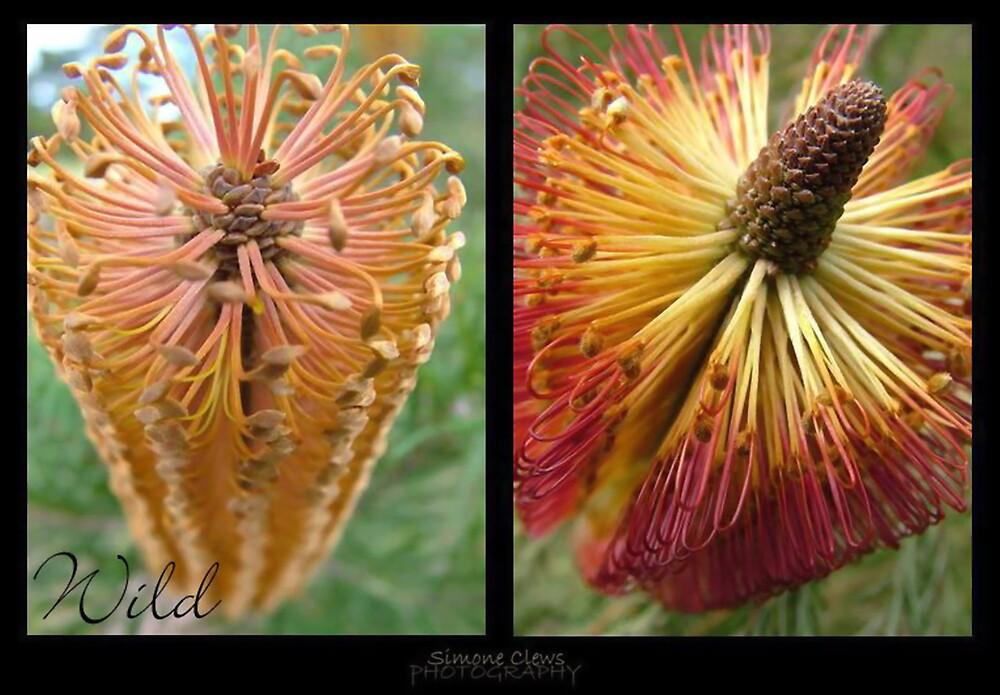 Wild Bush Banksia by Simone C