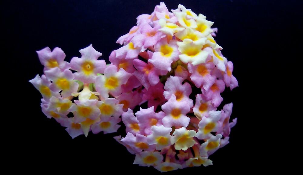 extreme flower arrangement by darkknight