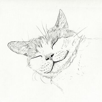 Sleeping Cat sketch by abarsoski