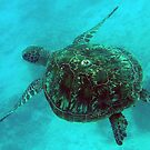 Free and easy Green Turtle by Mark Davey