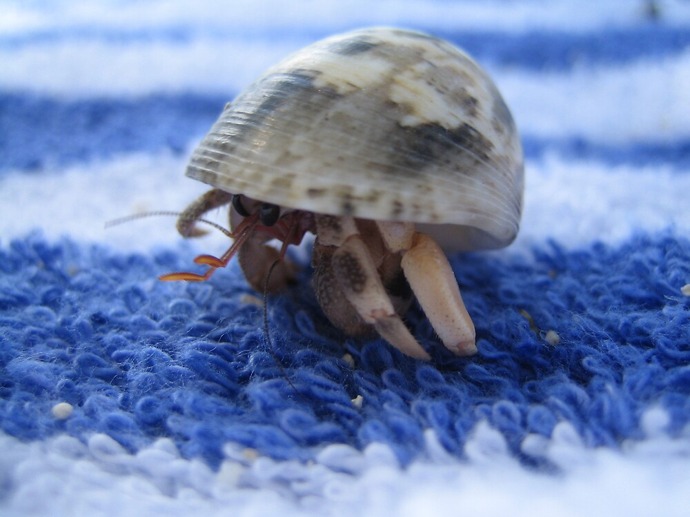 Hermit Crab by nicky
