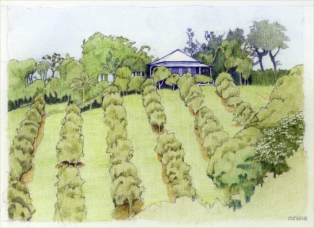 Landscape by Mariana Musa