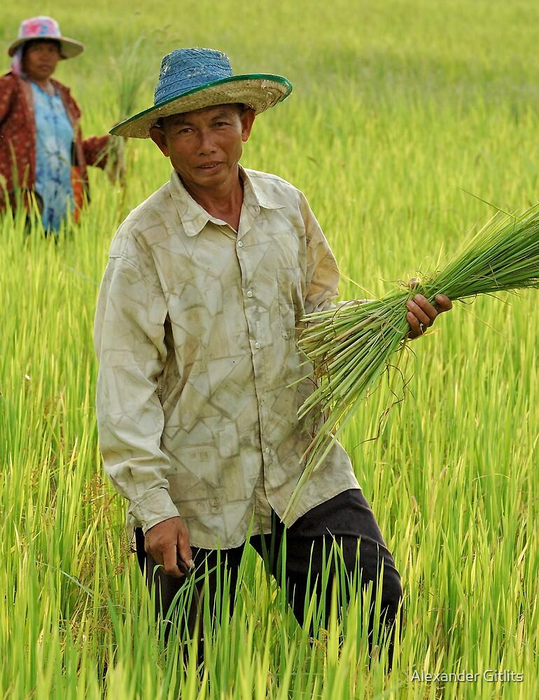 Thai Rice Farmer by Alexander Gitlits