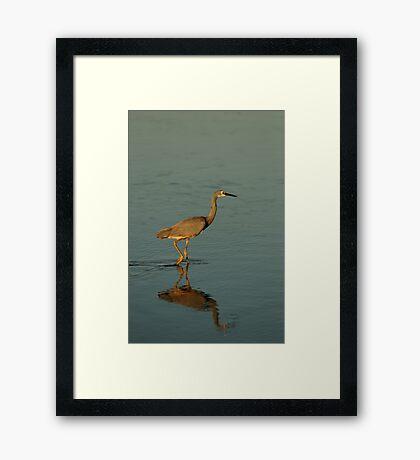 Wading Bird Framed Print