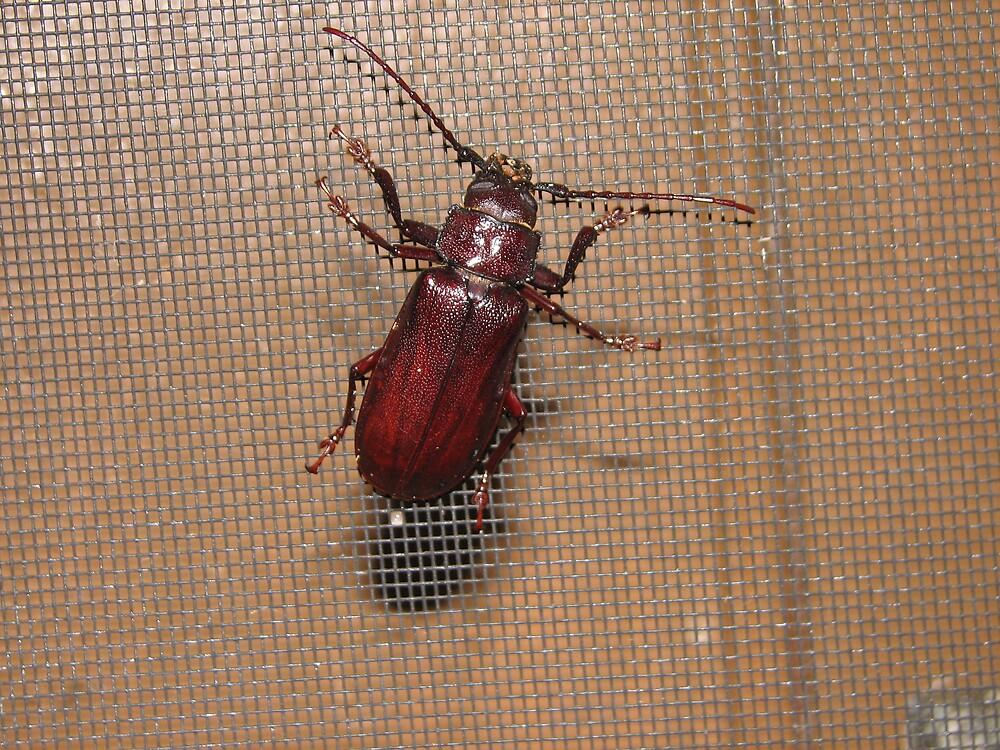 strange beetle by melissa sipek