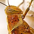 Cricket Close Up by Penny Smith