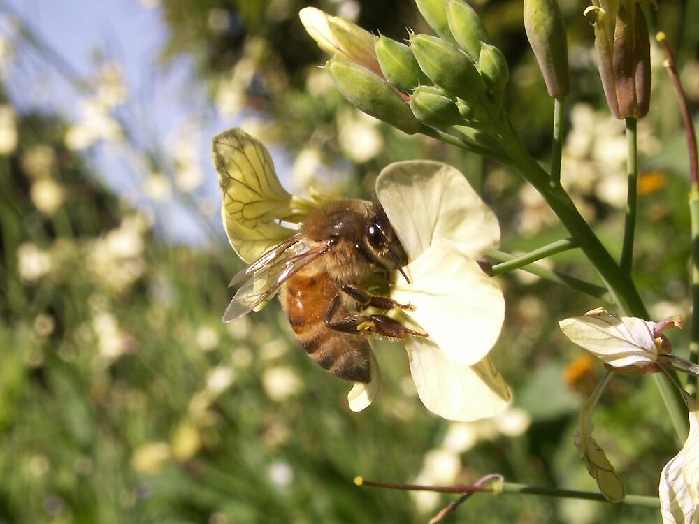 Nectar Collector by Bonnie Aungle