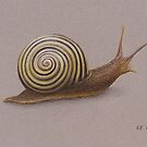 The Snail by Lars Furtwaengler