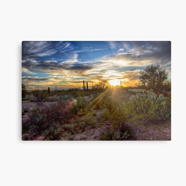 Tucson desert sunset - winter 2017 Metal Print