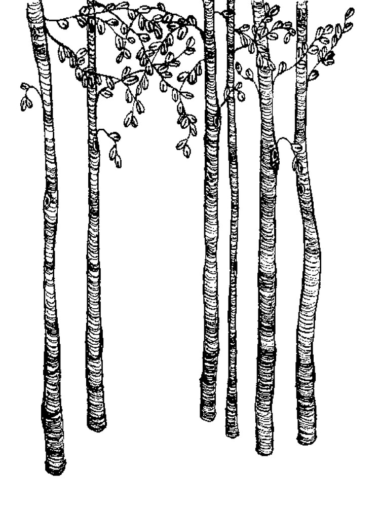 tall trees by hancakes