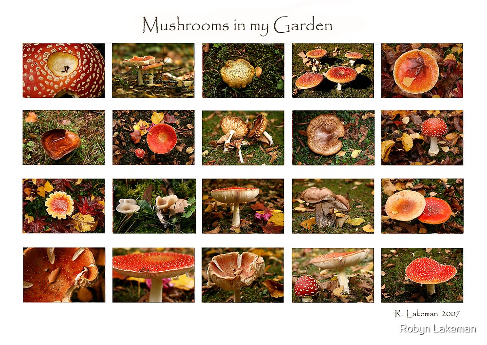 Mushrooms in my Garden by Robyn Lakeman