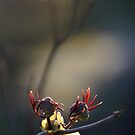 Spring buds by Tiina M Niskanen