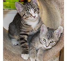 Tabby Kitten Cuties Photographic Print
