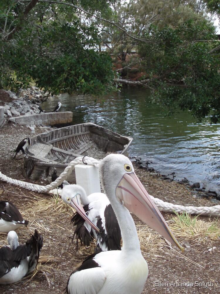 Pelican by Ellen Amanda Smyth