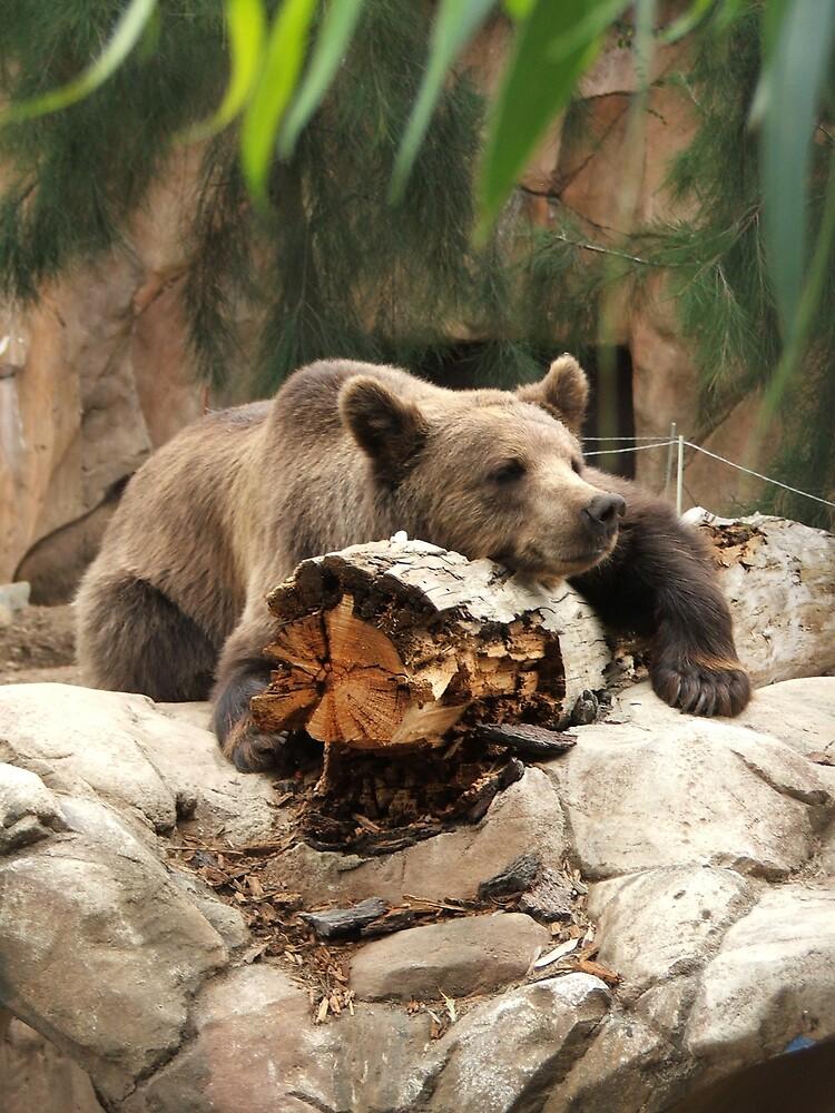 bear by simonsinclair