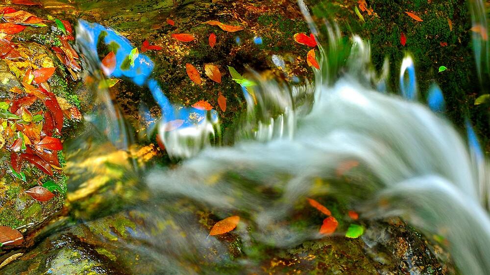 Autumn stream by matthew maguire