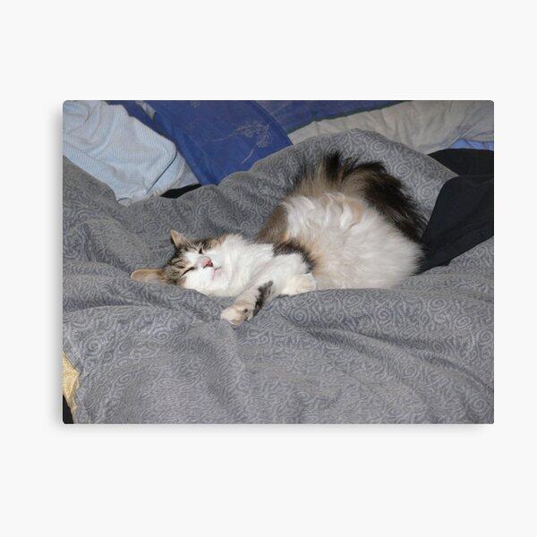 Keito, the Boneless cat Canvas Print
