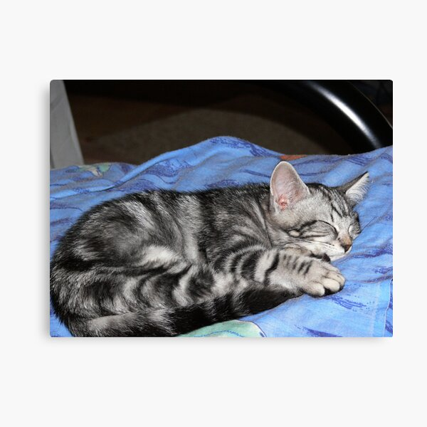 So tired Canvas Print