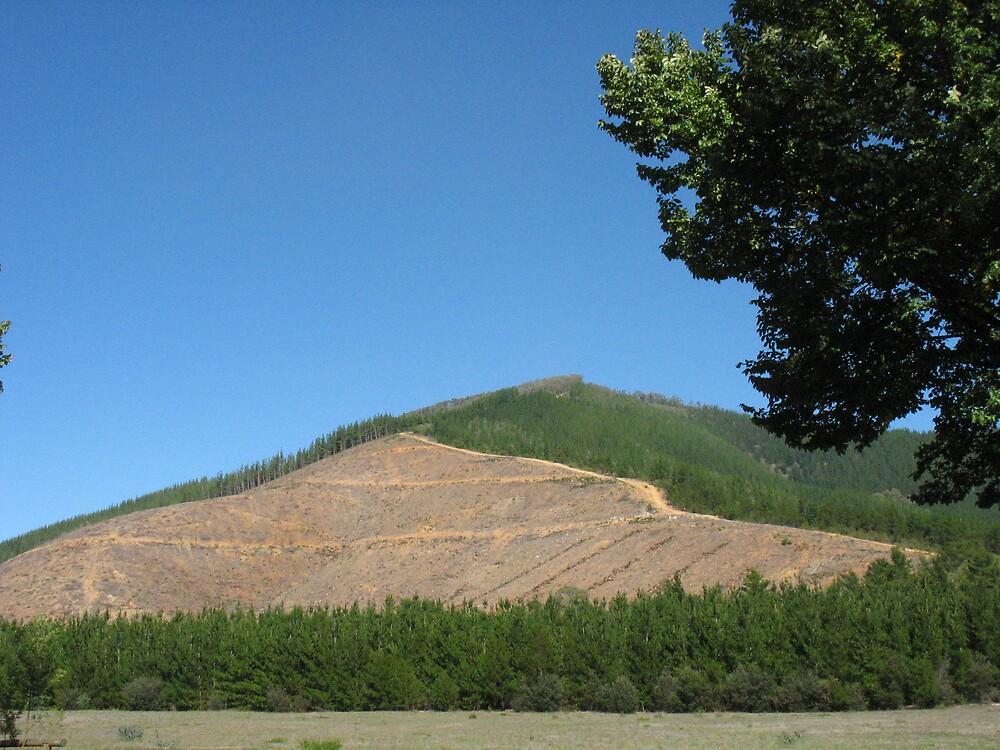 Deforestation by Julie Dunne