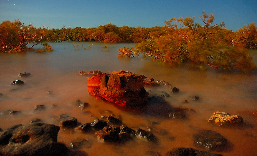 Redrock mangroves by matthew maguire