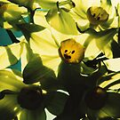Jonquils9 by danno