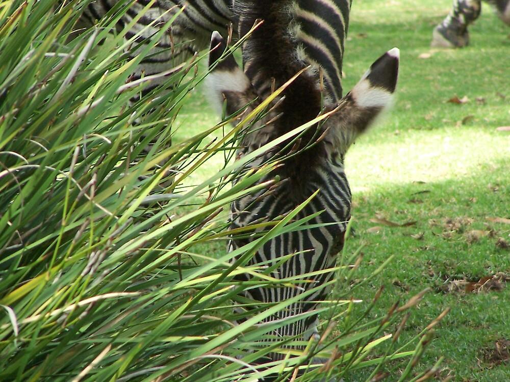 Stripes by Princessbren2006