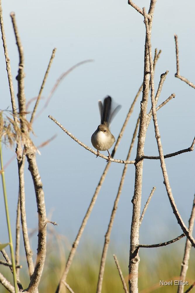 Small Bird #2 by Noel Elliot