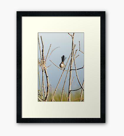 Small Bird #2 Framed Print