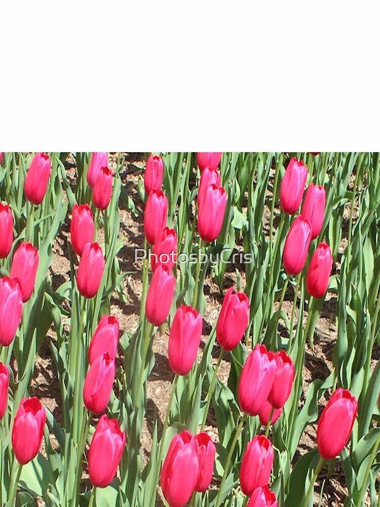 Tulips by PhotosbyCris