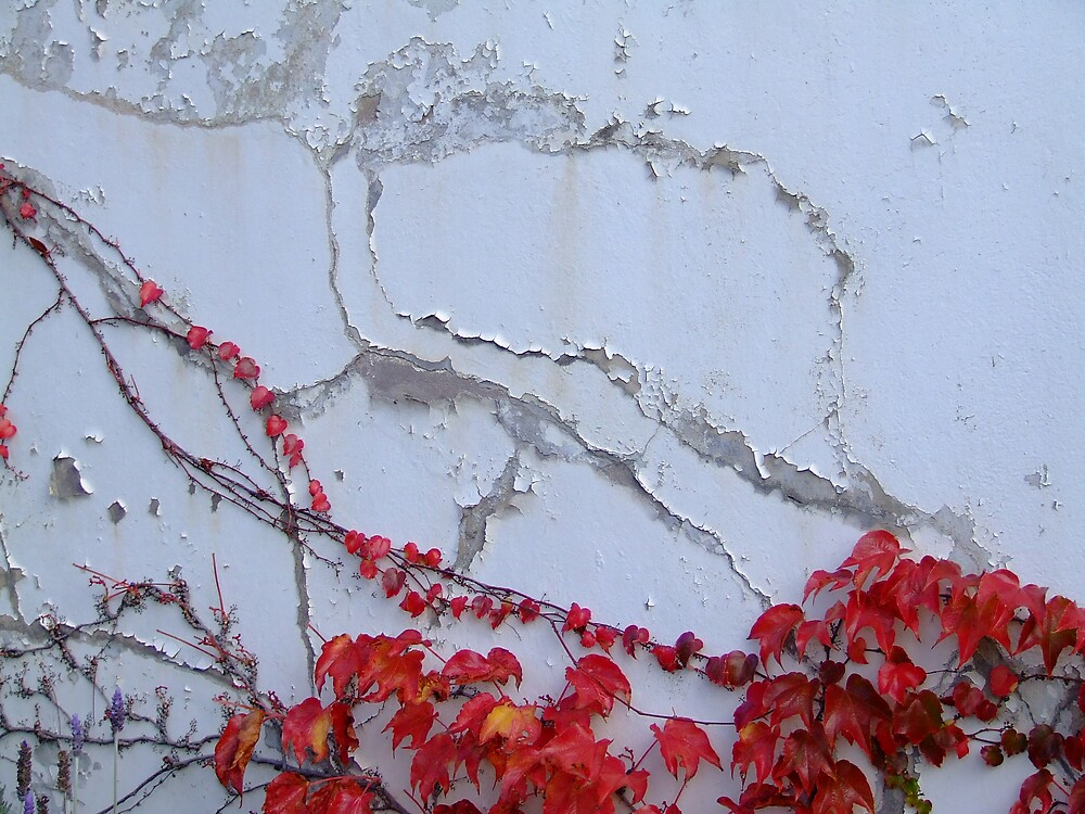 Red Vine 2 by Samara  Lee