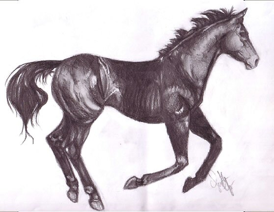 Black Horse by samth
