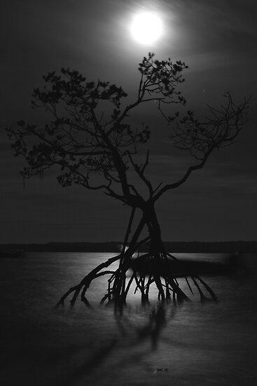 Moonlit Mangroves by Craig Scarr