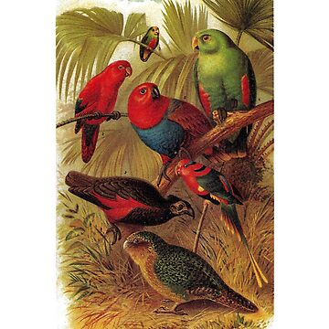 Parrots in the Jungle by dickybow