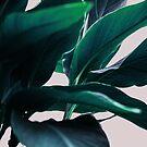 Palm Leaves 4 by Mareike Böhmer