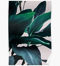 Palm Leaves 4 Poster