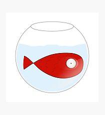 Petit poisson rouge dans un bocal Photographic Print