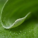 Curly Leaf by Jo  Young