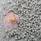 Shell Ball by Jo  Young