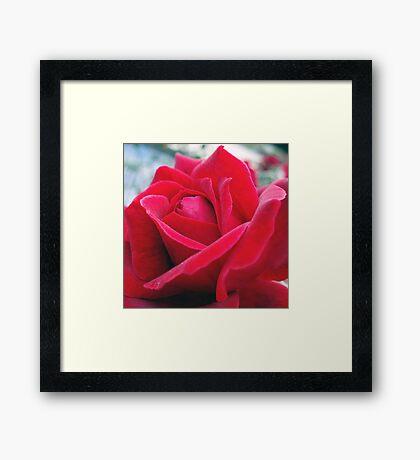 Rose Petals 2 Framed Print