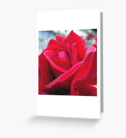 Rose Petals 2 Greeting Card
